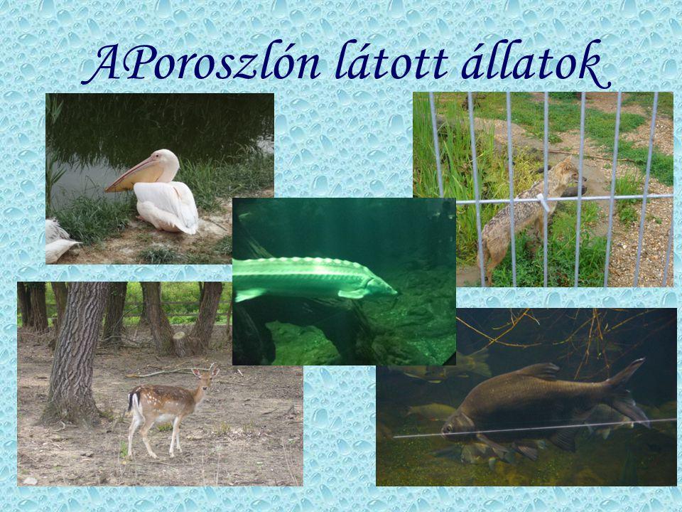 APoroszlón látott állatok
