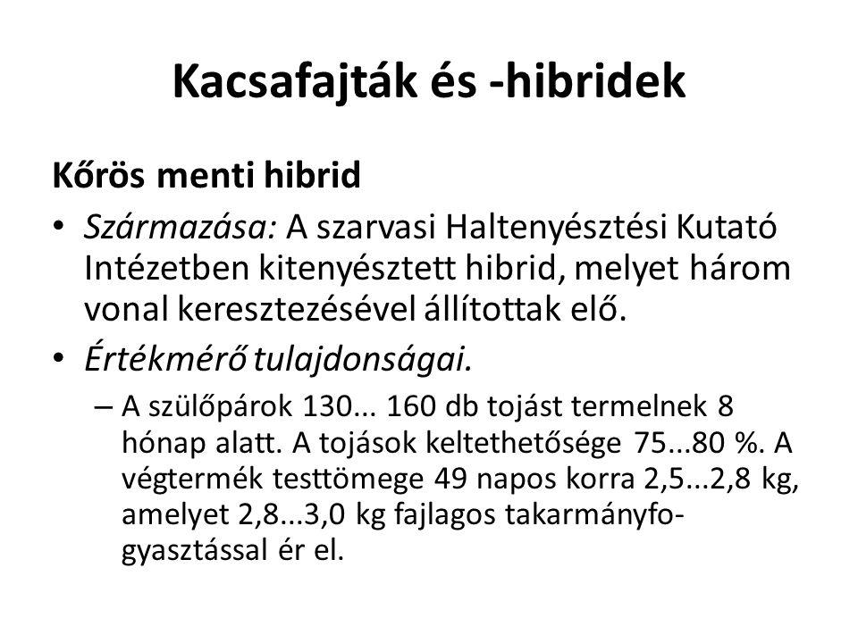 Kacsafajták és -hibridek Kőrös menti hibrid Származása: A szarvasi Haltenyésztési Kutató Intézetben kitenyésztett hibrid, melyet három vonal keresztez