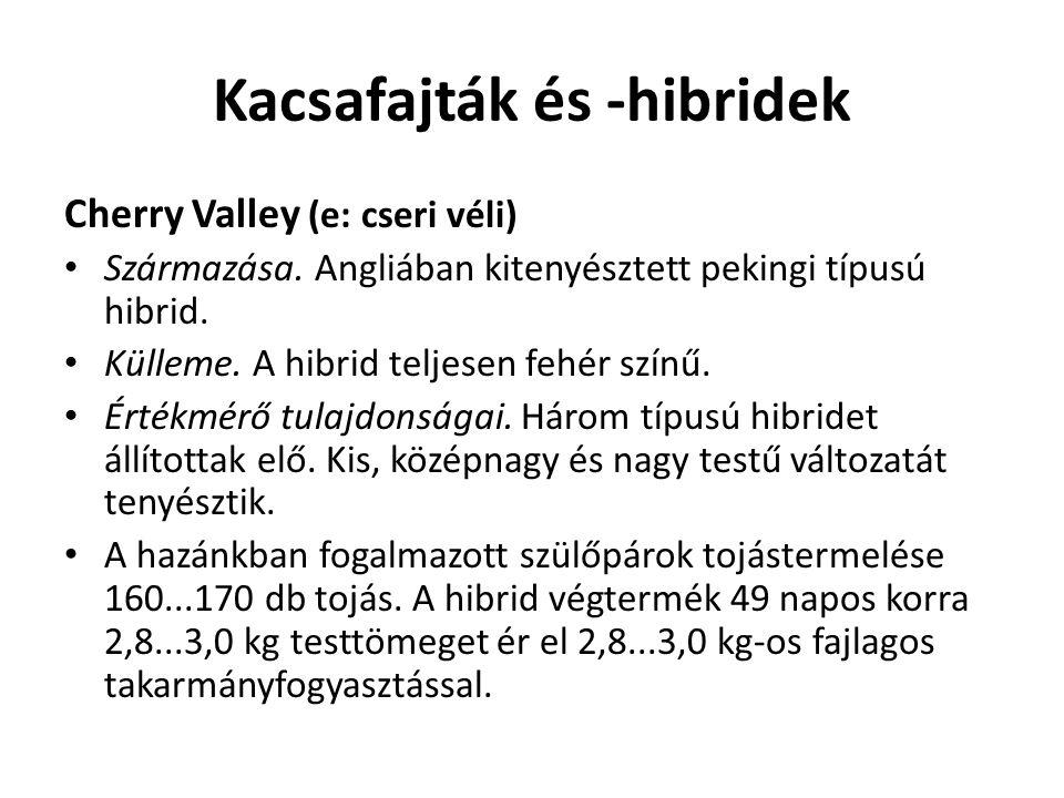 Kacsafajták és -hibridek Cherry Valley (e: cseri véli) Származása. Angliában kitenyésztett pekingi típusú hibrid. Külleme. A hibrid teljesen fehér szí