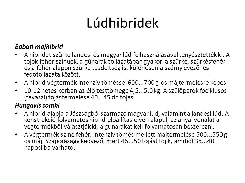 Lúdhibridek Babati májhibrid A hibridet szürke landesi és magyar lúd felhasználásával tenyésztették ki. A tojók fehér színűek, a gúnarak tollazatában