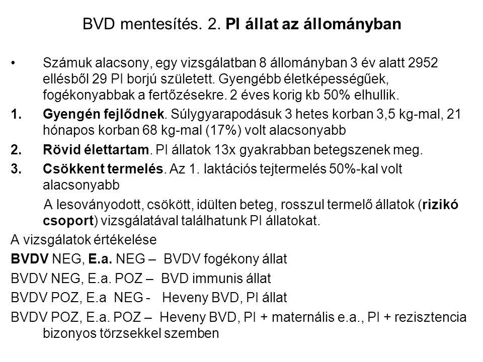 BVD mentesítés. 2. PI állat az állományban Számuk alacsony, egy vizsgálatban 8 állományban 3 év alatt 2952 ellésből 29 PI borjú született. Gyengébb él
