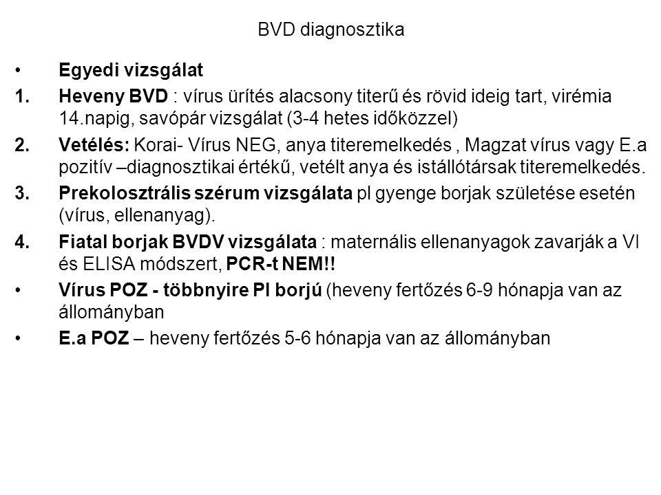 BVD diagnosztika Egyedi vizsgálat 1.Heveny BVD : vírus ürítés alacsony titerű és rövid ideig tart, virémia 14.napig, savópár vizsgálat (3-4 hetes idők