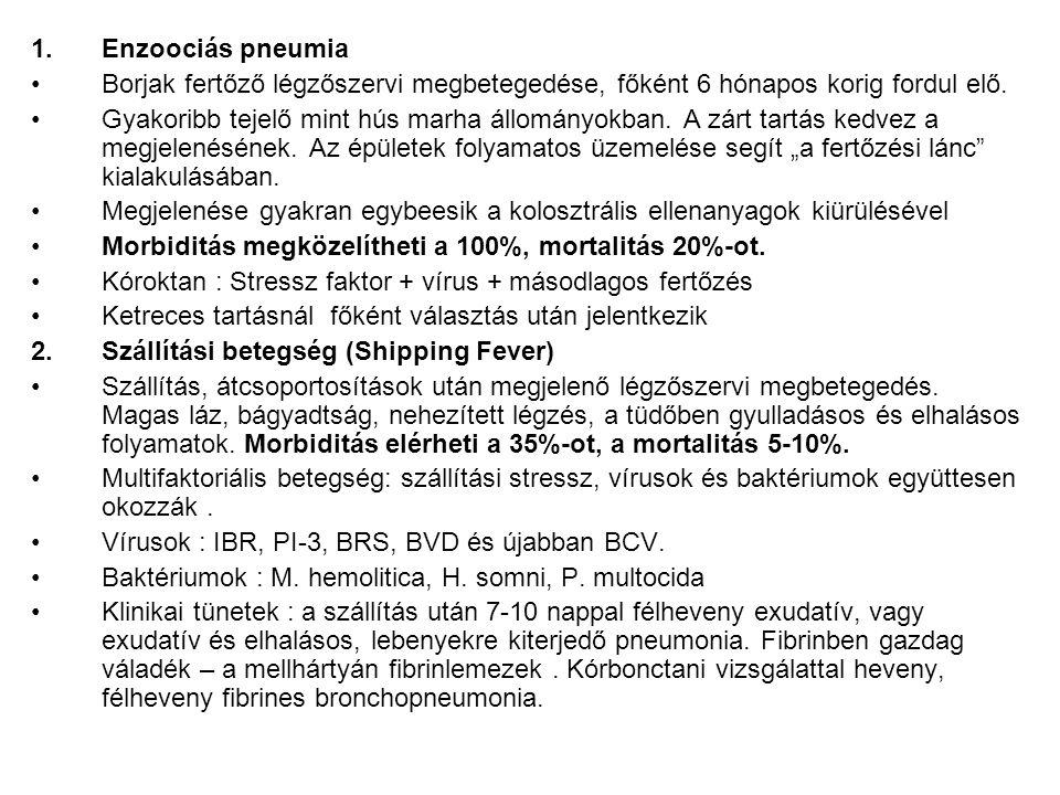 1.Enzoociás pneumia Borjak fertőző légzőszervi megbetegedése, főként 6 hónapos korig fordul elő. Gyakoribb tejelő mint hús marha állományokban. A zárt