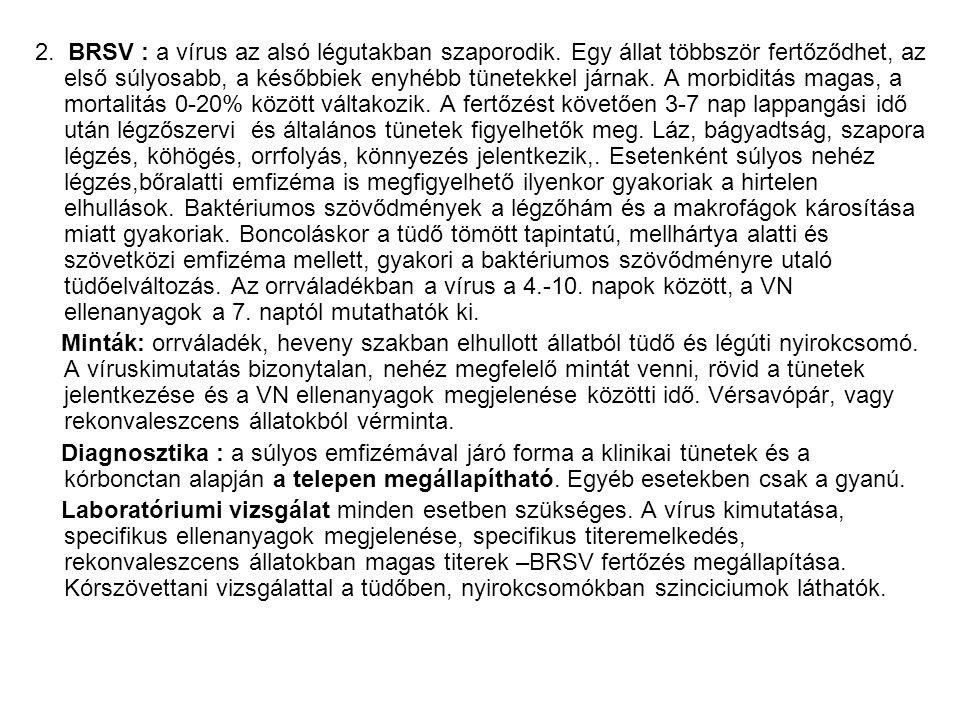 2. BRSV : a vírus az alsó légutakban szaporodik. Egy állat többször fertőződhet, az első súlyosabb, a későbbiek enyhébb tünetekkel járnak. A morbiditá