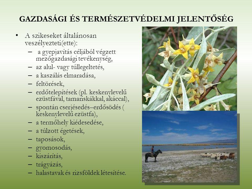 GAZDASÁGI ÉS TERMÉSZETVÉDELMI JELENTŐSÉG A szikeseket általánosan veszélyezteti(ette): – a gyepjavítás céljából végzett mezőgazdasági tevékenység, – a