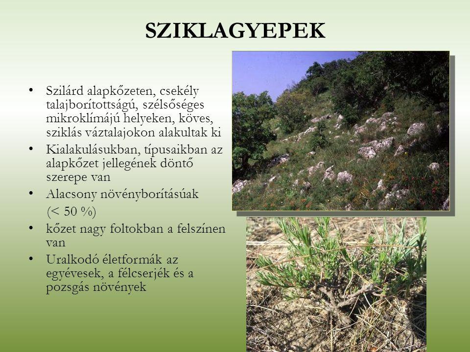 SZIKLAGYEPEK Szilárd alapkőzeten, csekély talajborítottságú, szélsőséges mikroklímájú helyeken, köves, sziklás váztalajokon alakultak ki Kialakulásukb
