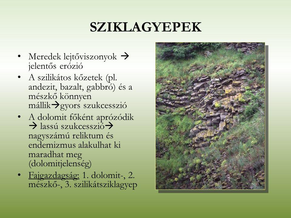 SZIKLAGYEPEK Meredek lejtőviszonyok  jelentős erózió A szilikátos kőzetek (pl. andezit, bazalt, gabbró) és a mészkő könnyen mállik  gyors szukcesszi