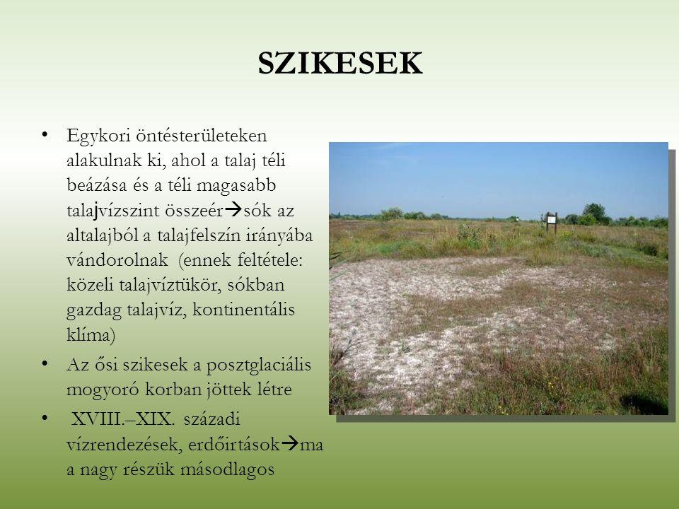 SZIKESEK Egykori öntésterületeken alakulnak ki, ahol a talaj téli beázása és a téli magasabb tala j vízszint összeér  sók az altalajból a talajfelszí