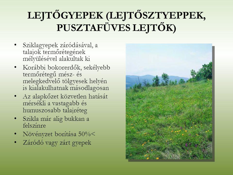 LEJTŐGYEPEK (LEJTŐSZTYEPPEK, PUSZTAFÜVES LEJTŐK) Sziklagyepek záródásával, a talajok termőrétegének mélyülésével alakultak ki Korábbi bokorerdők, seké