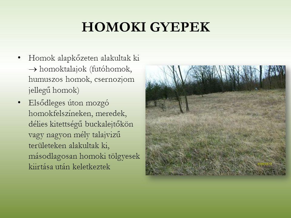 HOMOKI GYEPEK Homok alapkőzeten alakultak ki  homoktalajok (futóhomok, humuszos homok, csernozjom jellegű homok) Elsődleges úton mozgó homokfelszínek