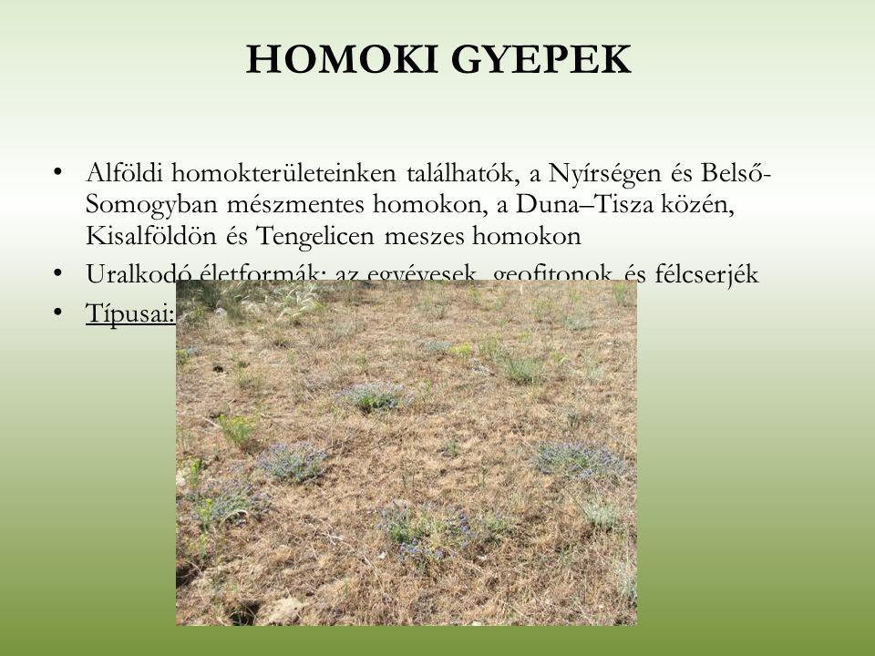 HOMOKI GYEPEK Alföldi homokterületeinken találhatók, a Nyírségen és Belső- Somogyban mészmentes homokon, a Duna–Tisza közén, Kisalföldön és Tengelicen