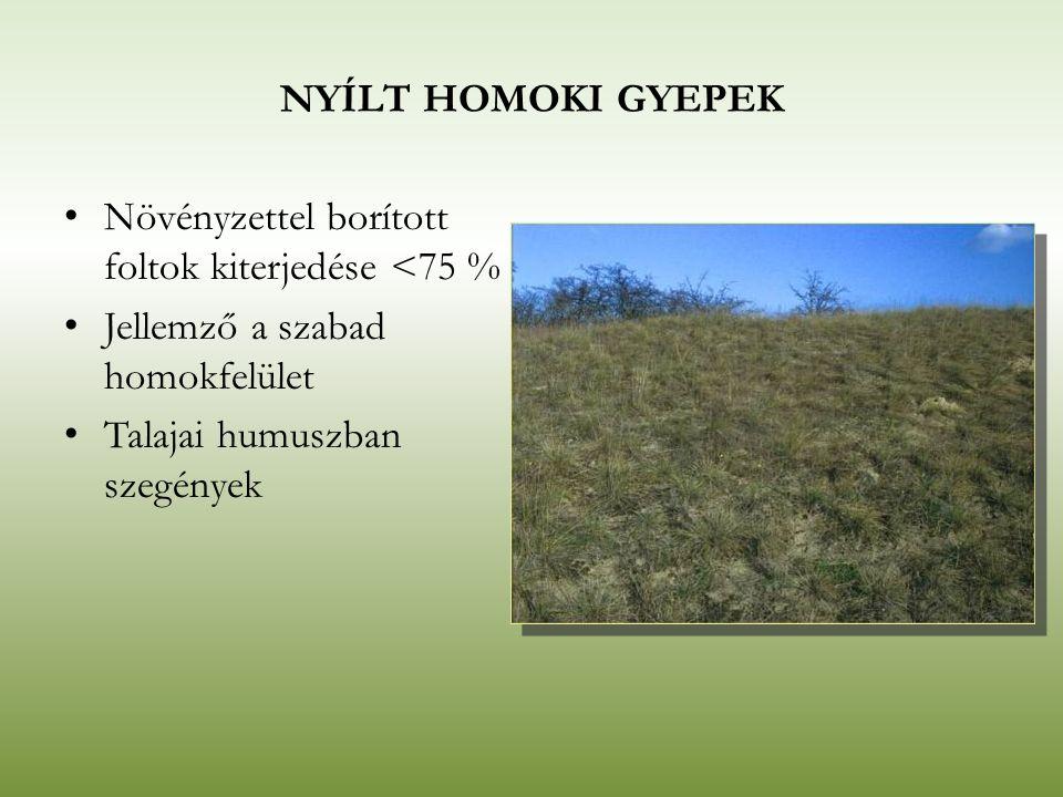NYÍLT HOMOKI GYEPEK Növényzettel borított foltok kiterjedése <75 % Jellemző a szabad homokfelület Talajai humuszban szegények