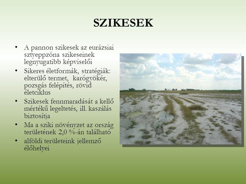 SZIKESEK A pannon szikesek az eurázsiai sztyeppzóna szikeseinek legnyugatibb képviselői Sikeres életformák, stratégiák: elterülő termet, karógyökér, p