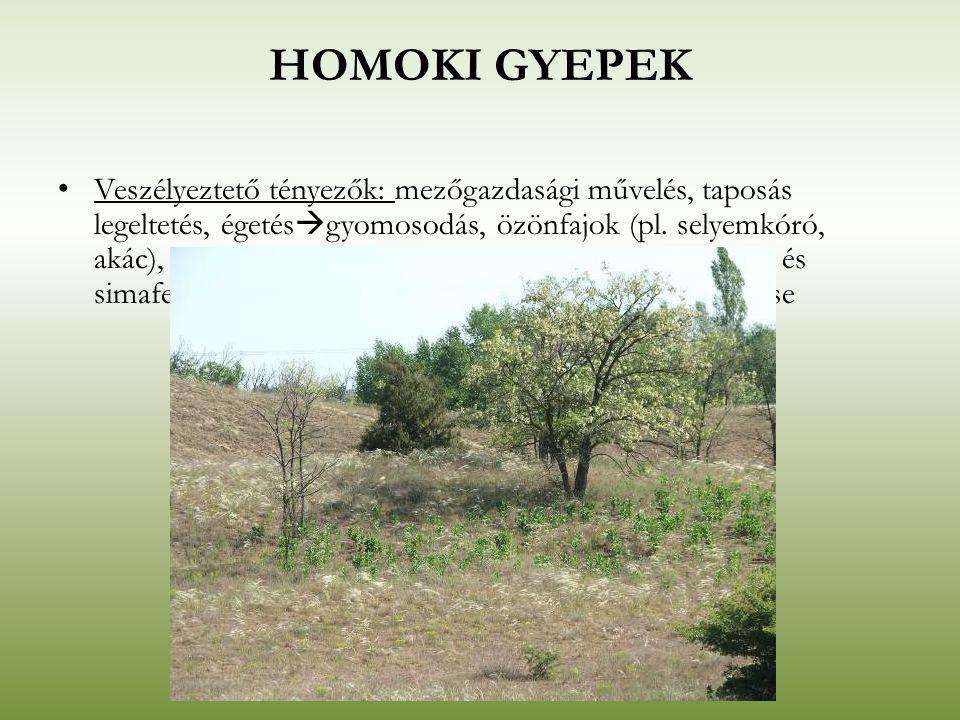 HOMOKI GYEPEK Veszélyeztető tényezők: mezőgazdasági művelés, taposás legeltetés, égetés  gyomosodás, özönfajok (pl. selyemkóró, akác), valamint a kul