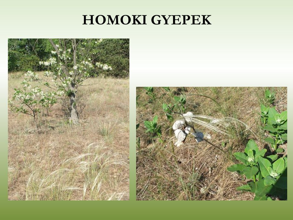 HOMOKI GYEPEK