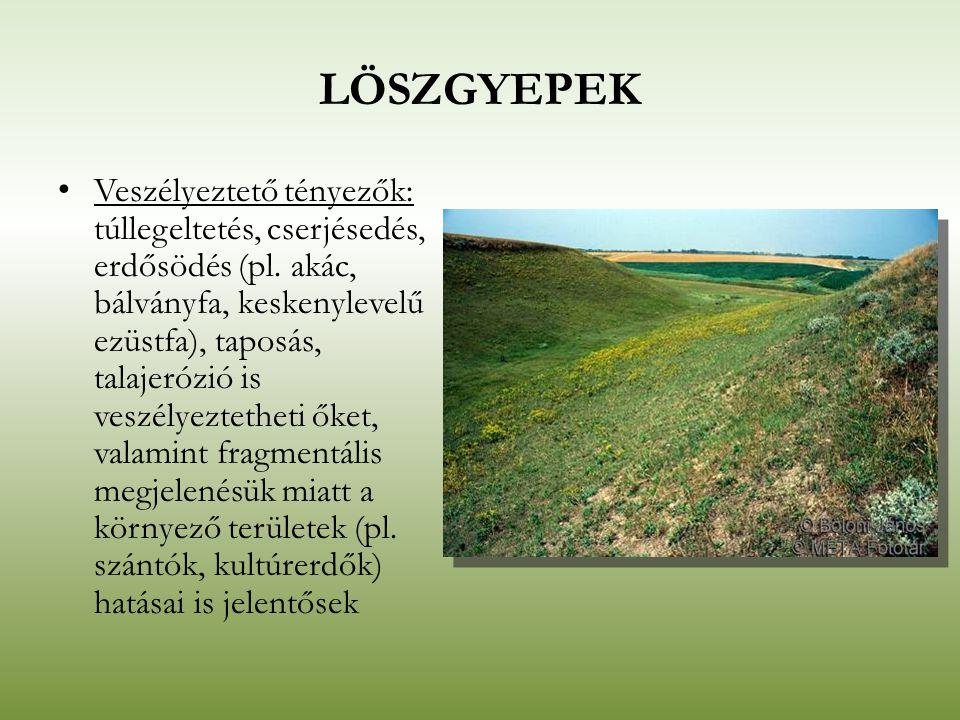 LÖSZGYEPEK Veszélyeztető tényezők: túllegeltetés, cserjésedés, erdősödés (pl. akác, bálványfa, keskenylevelű ezüstfa), taposás, talajerózió is veszély