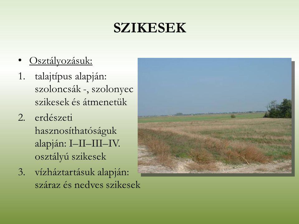 SZIKESEK Osztályozásuk: 1.talajtípus alapján: szoloncsák -, szolonyec szikesek és átmenetük 2.erdészeti hasznosíthatóságuk alapján: I–II–III–IV. osztá
