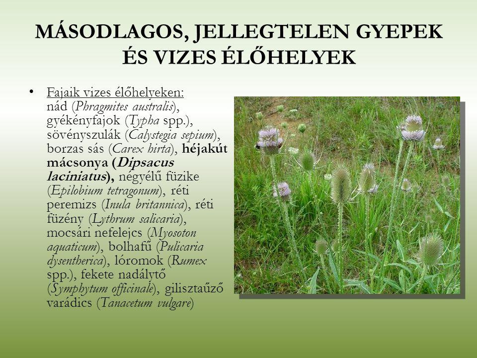 MÁSODLAGOS, JELLEGTELEN GYEPEK ÉS VIZES ÉLŐHELYEK Fajaik vizes élőhelyeken: nád (Phragmites australis), gyékényfajok (Typha spp.), sövényszulák (Calys