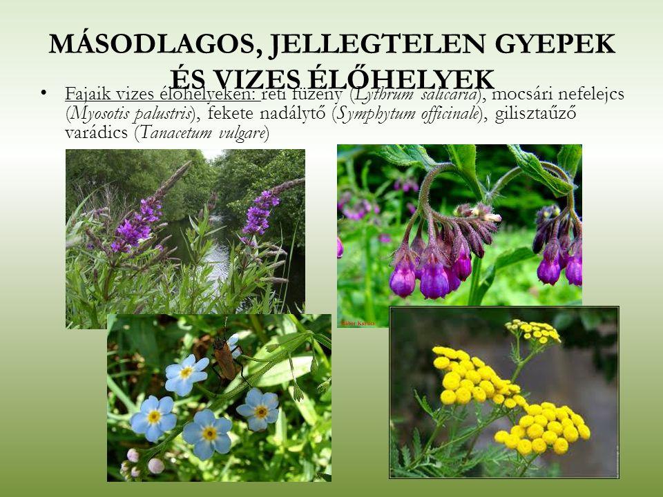 MÁSODLAGOS, JELLEGTELEN GYEPEK ÉS VIZES ÉLŐHELYEK Fajaik vizes élőhelyeken: réti füzény (Lythrum salicaria), mocsári nefelejcs (Myosotis palustris), f