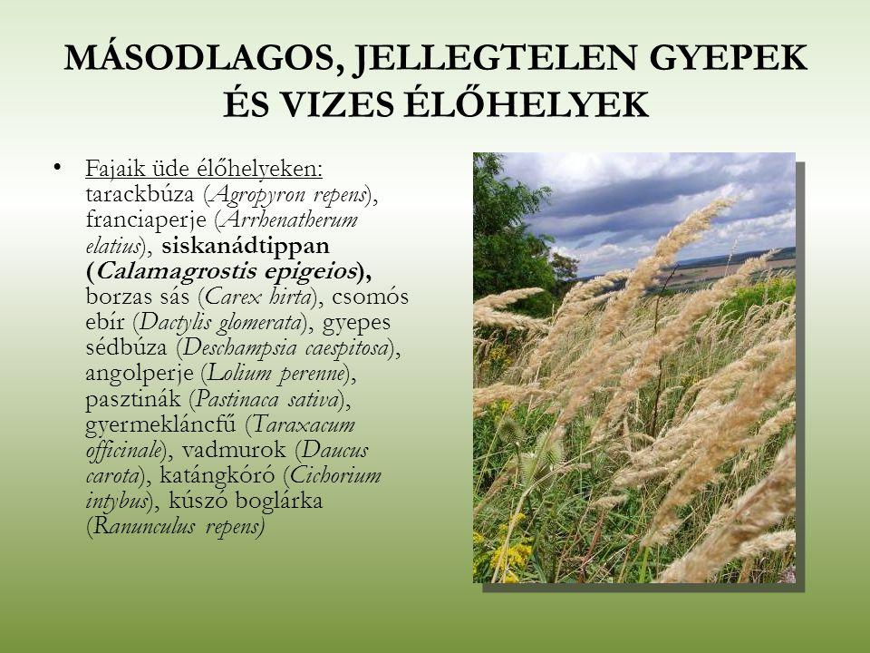 MÁSODLAGOS, JELLEGTELEN GYEPEK ÉS VIZES ÉLŐHELYEK Fajaik üde élőhelyeken: tarackbúza (Agropyron repens), franciaperje (Arrhenatherum elatius), siskaná