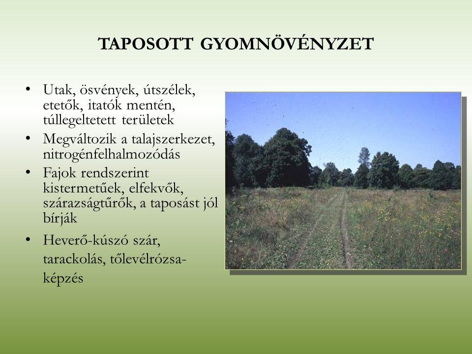 TAPOSOTT GYOMNÖVÉNYZET Utak, ösvények, útszélek, etetők, itatók mentén, túllegeltetett területek Megváltozik a talajszerkezet, nitrogénfelhalmozódás F