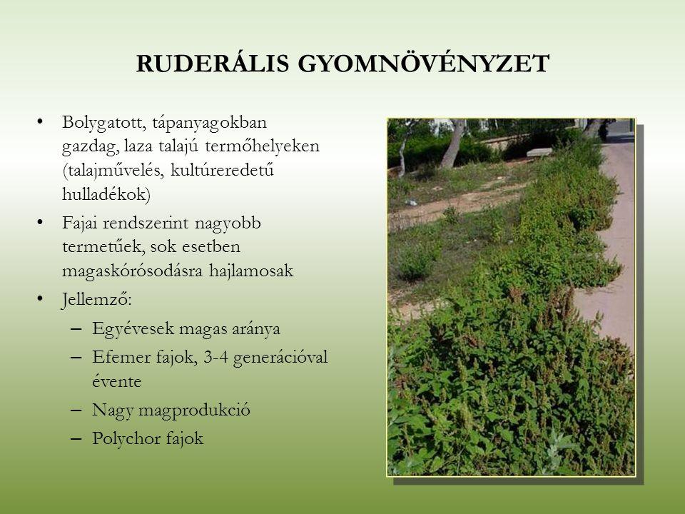 RUDERÁLIS GYOMNÖVÉNYZET Bolygatott, tápanyagokban gazdag, laza talajú termőhelyeken (talajművelés, kultúreredetű hulladékok) Fajai rendszerint nagyobb