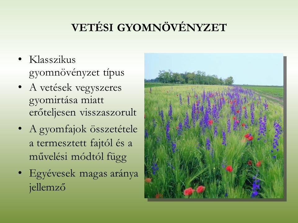 VETÉSI GYOMNÖVÉNYZET Klasszikus gyomnövényzet típus A vetések vegyszeres gyomirtása miatt erőteljesen visszaszorult A gyomfajok összetétele a termeszt