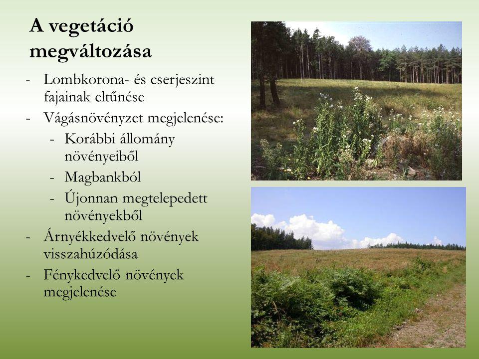 -Lombkorona- és cserjeszint fajainak eltűnése -Vágásnövényzet megjelenése: -Korábbi állomány növényeiből -Magbankból -Újonnan megtelepedett növényekbő