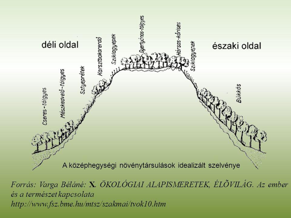 Forrás: Varga Béláné: X. ÖKOLÓGIAI ALAPISMERETEK, ÉLÕVILÁG. Az ember és a természet kapcsolata http://www.fsz.bme.hu/mtsz/szakmai/tvok10.htm A középhe