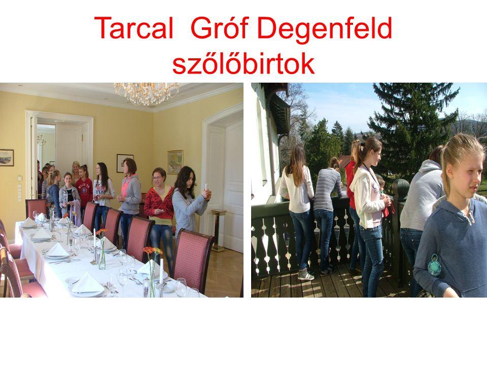 Tarcal Gróf Degenfeld szőlőbirtok