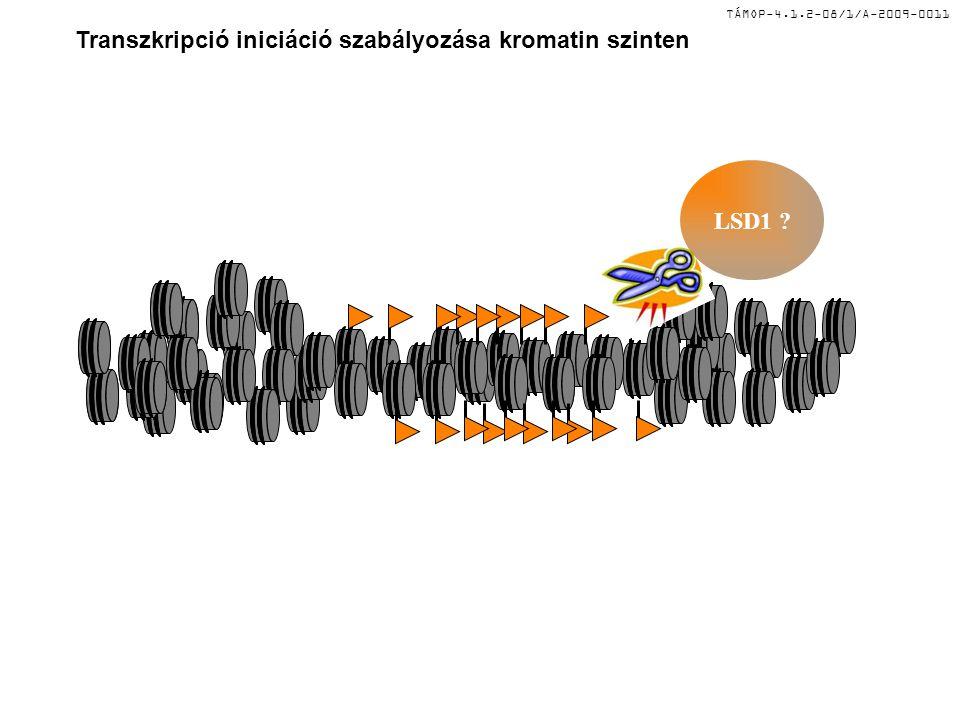 TÁMOP-4.1.2-08/1/A-2009-0011 Transzkripció iniciáció szabályozása kromatin szinten LSD1 ?