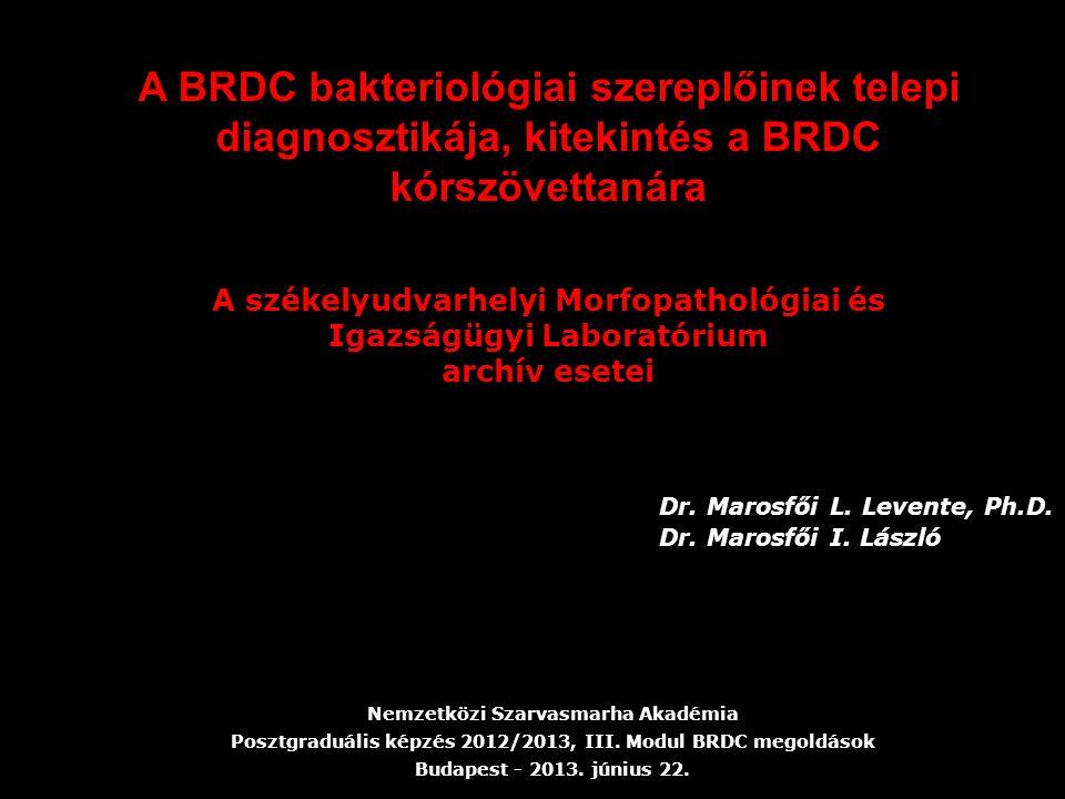 Nemzetközi Szarvasmarha Akadémia Posztgraduális képzés 2012/2013, III. Modul BRDC megoldások Budapest - 2013. június 22. Dr. Marosfői L. Levente, Ph.D
