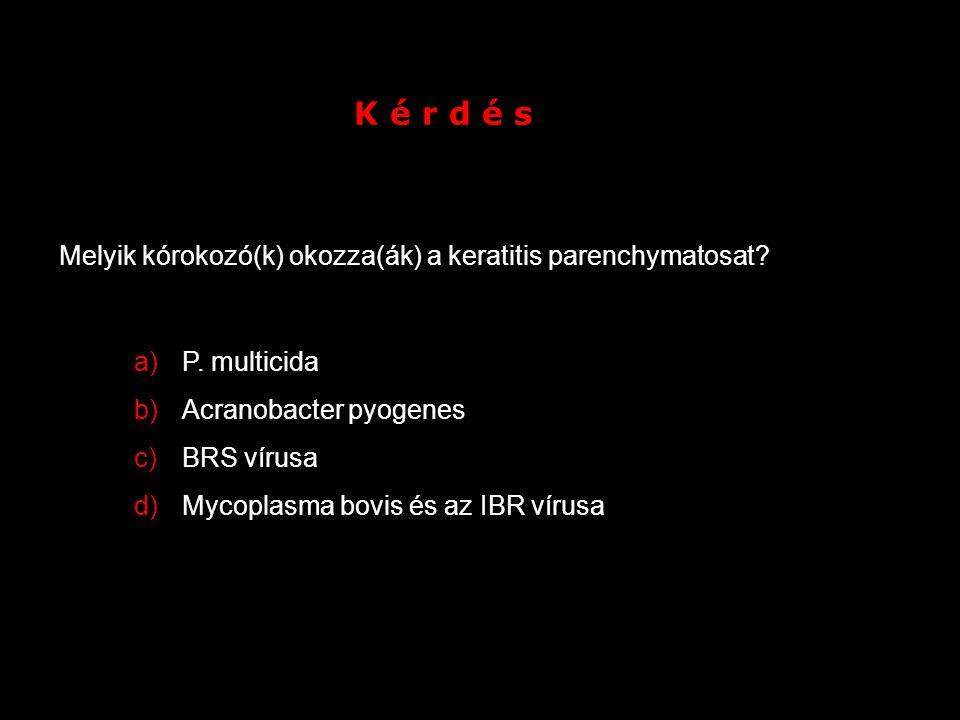 K é r d é s Melyik kórokozó(k) okozza(ák) a keratitis parenchymatosat? a)P. multicida b)Acranobacter pyogenes c)BRS vírusa d)Mycoplasma bovis és az IB