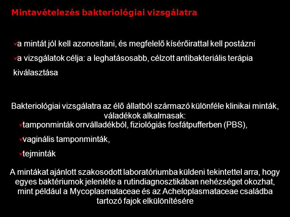Súlyos hurutos bronchitis és interstitialis pneumonia. PAS-alciánkék reakció