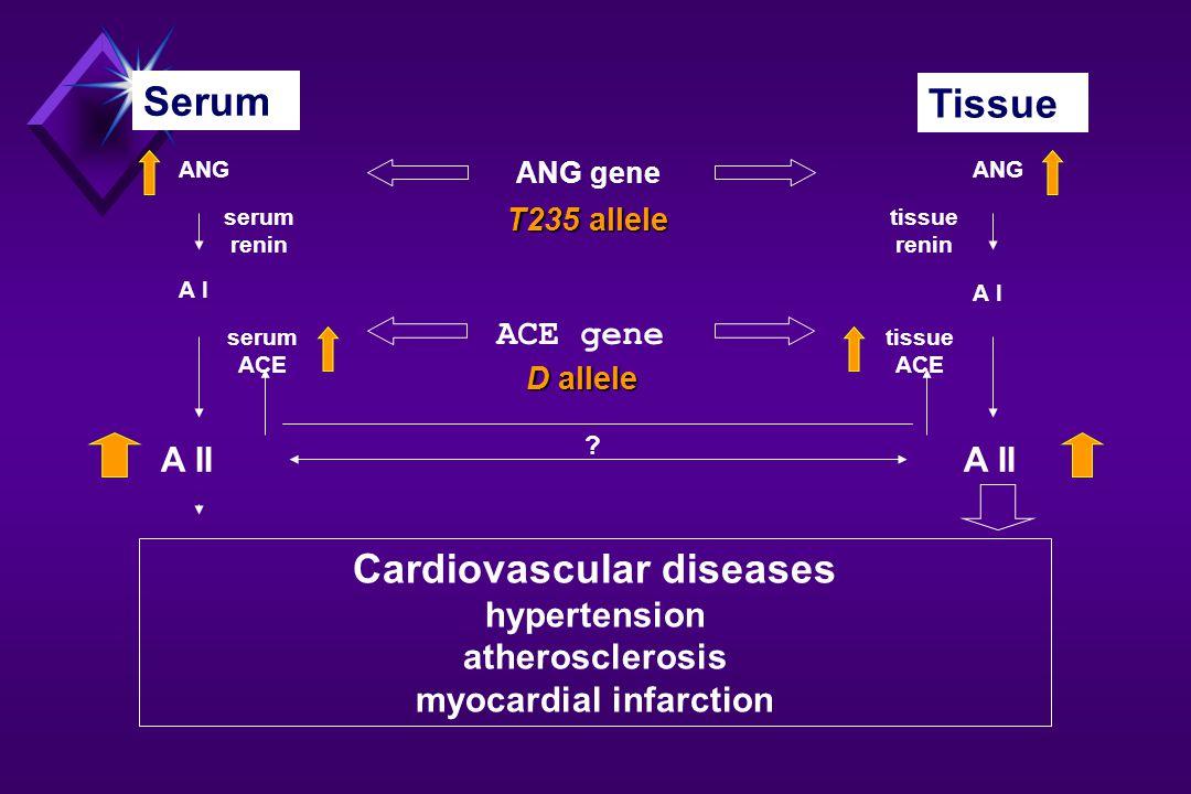 Serum Tissue ANG A I A II ANG gene serum renin tissue renin ACE gene serum ACE tissue ACE .