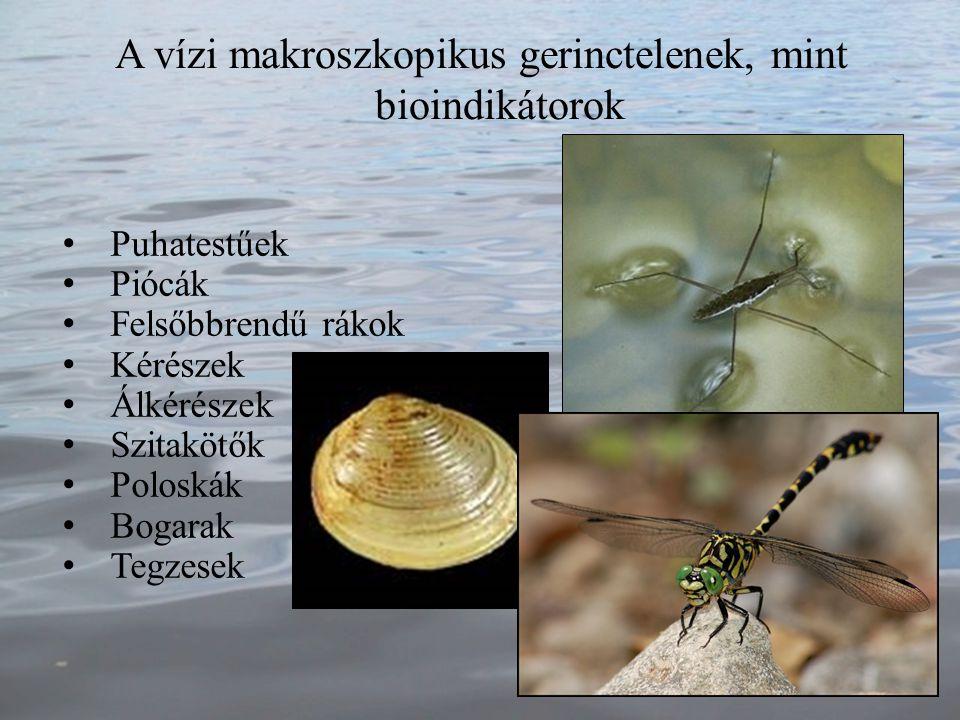 Puhatestűek Piócák Felsőbbrendű rákok Kérészek Álkérészek Szitakötők Poloskák Bogarak Tegzesek A vízi makroszkopikus gerinctelenek, mint bioindikátoro