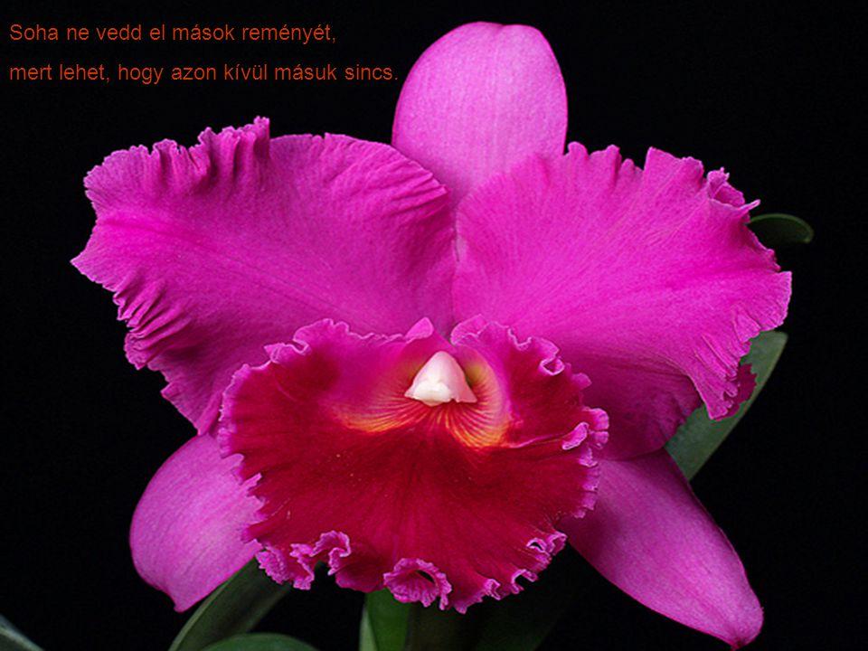 ORCHIDEÁK ORCHIDEÁK Zene: Autumn Rose