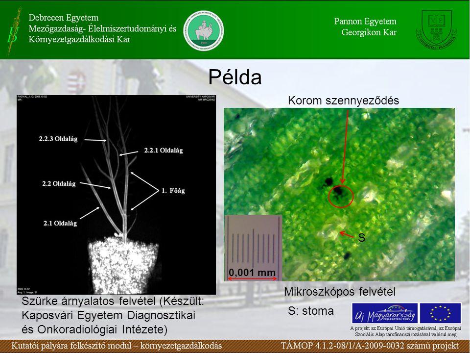 Példa 0,001 mm Szürke árnyalatos felvétel (Készült: Kaposvári Egyetem Diagnosztikai és Onkoradiológiai Intézete) Mikroszkópos felvétel Korom szennyeződés S: stoma S
