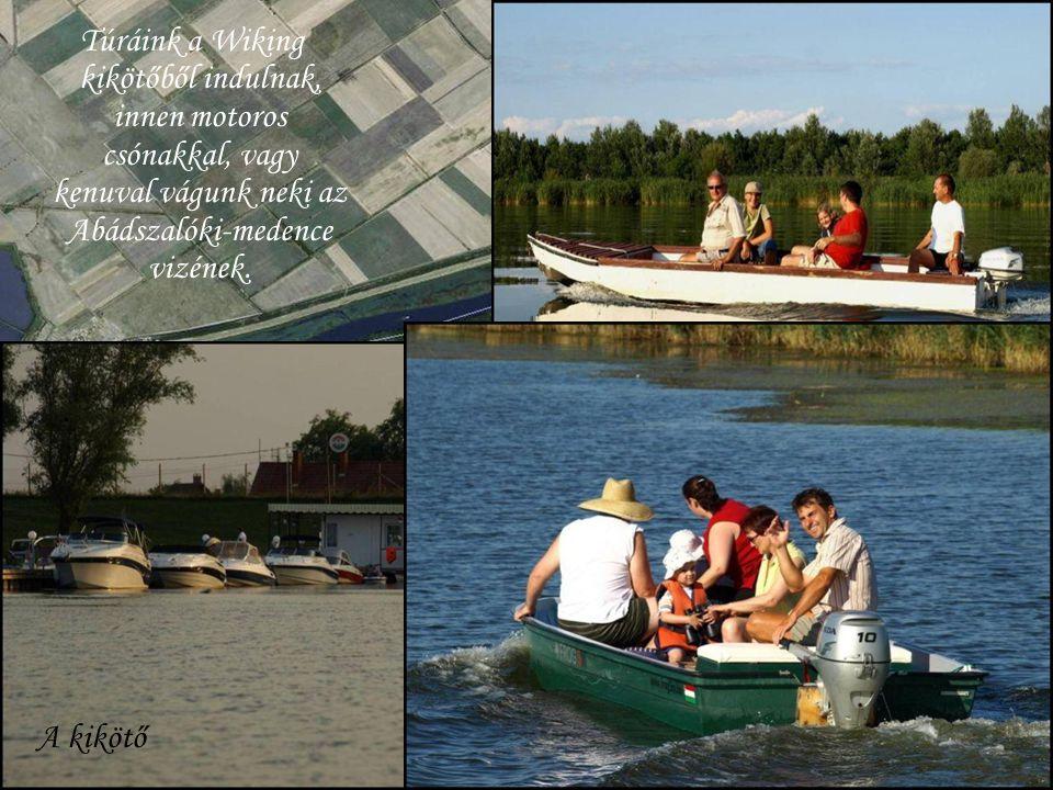 Túráink a Wiking kikötőből indulnak, innen motoros csónakkal, vagy kenuval vágunk neki az Abádszalóki-medence vizének. A kikötő.