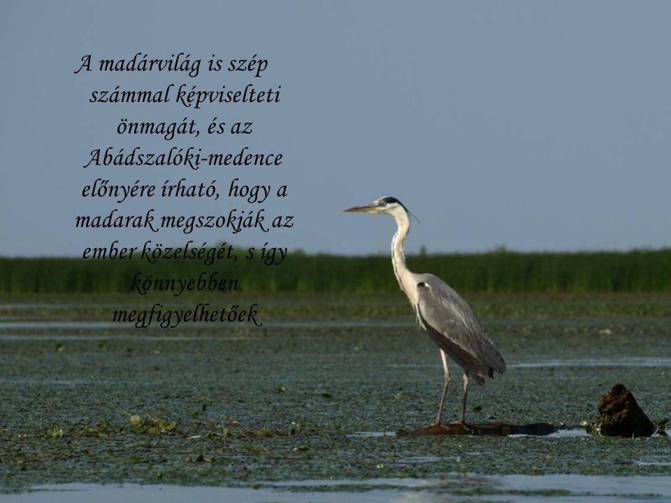 A madárvilág is szép számmal képviselteti önmagát, és az Abádszalóki-medence előnyére írható, hogy a madarak megszokják az ember közelségét, s így kön