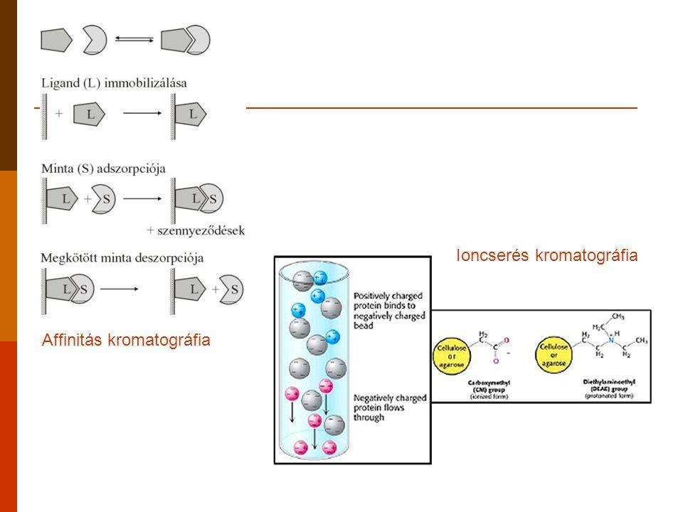 Affinitás kromatográfia Ioncserés kromatográfia