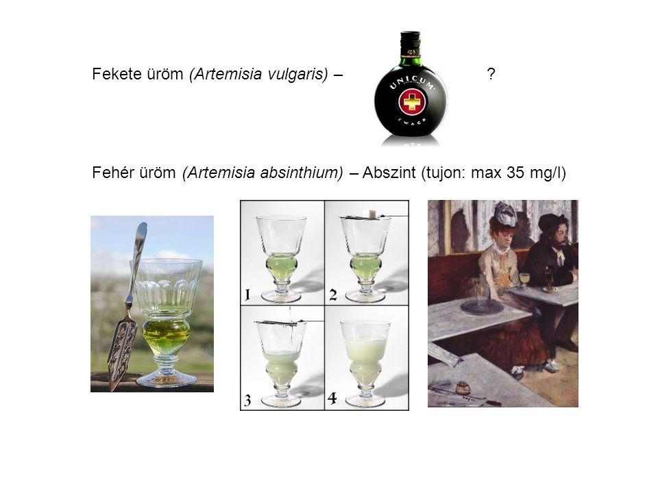 Fekete üröm (Artemisia vulgaris) –? Fehér üröm (Artemisia absinthium) – Abszint (tujon: max 35 mg/l)