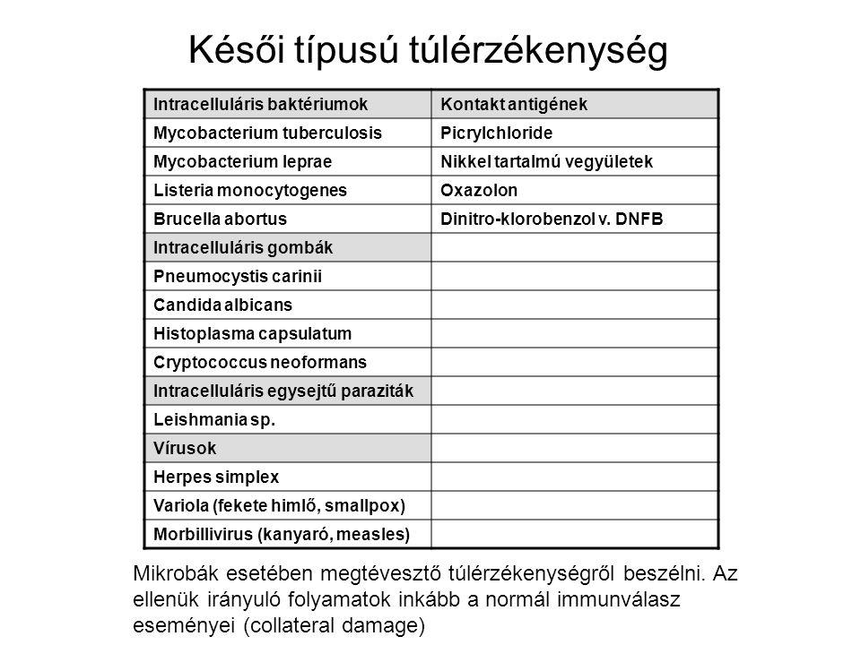 Késői típusú túlérzékenység Intracelluláris baktériumokKontakt antigének Mycobacterium tuberculosisPicrylchloride Mycobacterium lepraeNikkel tartalmú