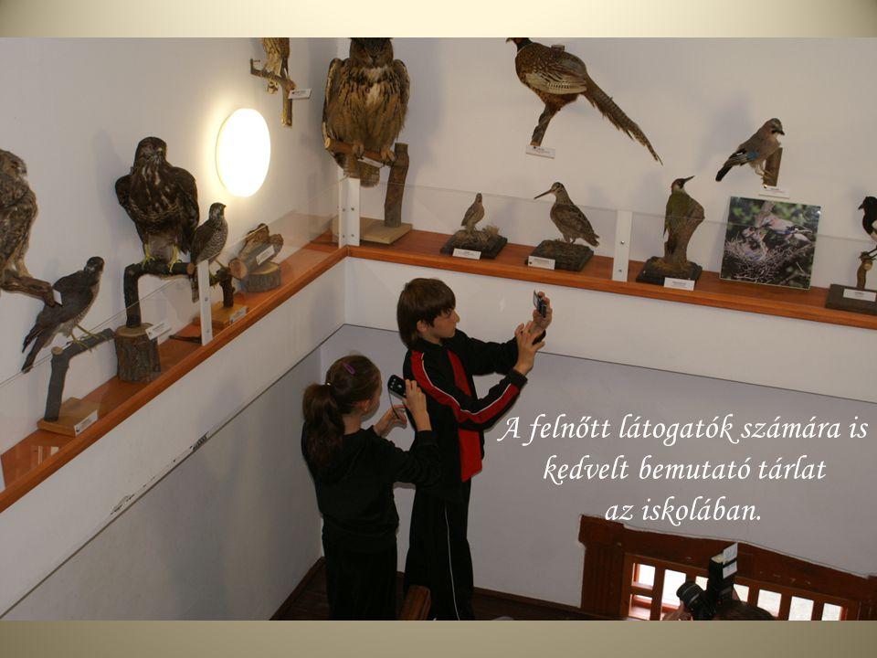 A felnőtt látogatók számára is kedvelt bemutató tárlat az iskolában.