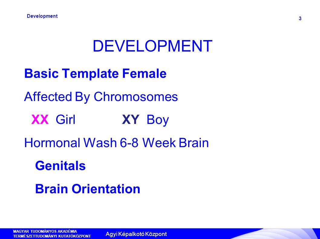 MAGYAR TUDOMÁNYOS AKADÉMIA TERMÉSZETTUDOMÁNYI KUTATÓKÖZPONT ANYAG- ÉS KÖRNYEZETKÉMIAI INTÉZET 3 DEVELOPMENT Development Basic Template Female Affected