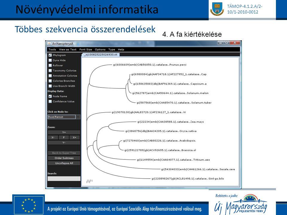 TÁMOP-4.1.2.A/2- 10/1-2010-0012 Többes szekvencia összerendelések Növényvédelmi informatika 4. A fa kiértékelése