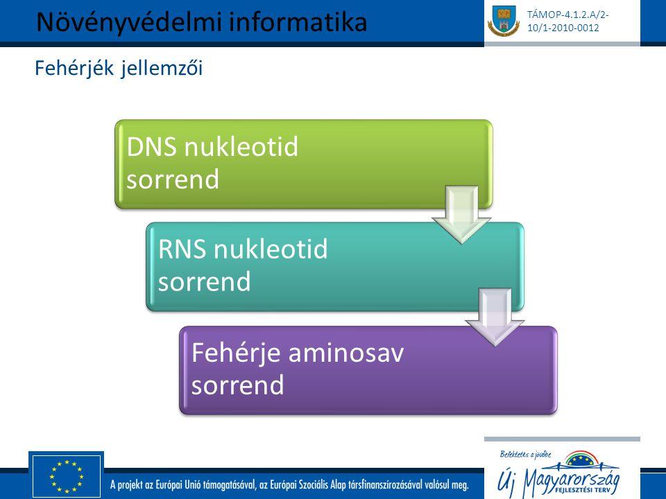 TÁMOP-4.1.2.A/2- 10/1-2010-0012 Fehérjék jellemzői Növényvédelmi informatika DNS nukleotid sorrend RNS nukleotid sorrend Fehérje aminosav sorrend