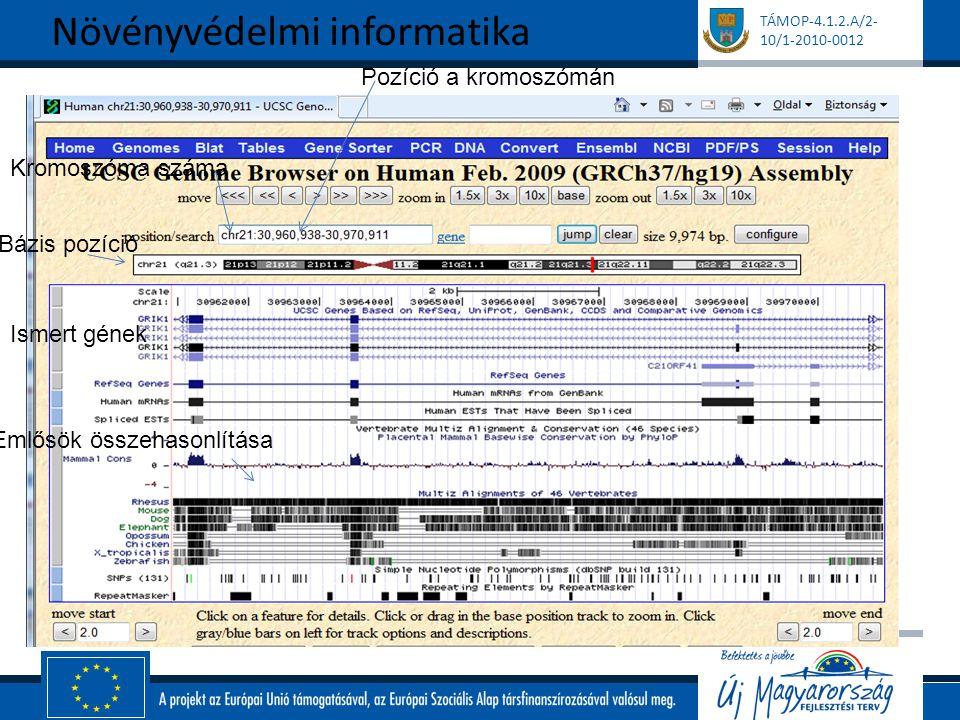 TÁMOP-4.1.2.A/2- 10/1-2010-0012 Kromoszóma száma Pozíció a kromoszómán Bázis pozíció Ismert gének Emlősök összehasonlítása Növényvédelmi informatika