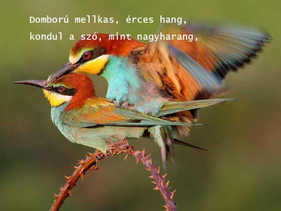A verset azon hölgyek kérésére írtam, akiknek természetét, magatartását bökverseimben sokszor megénekeltem.