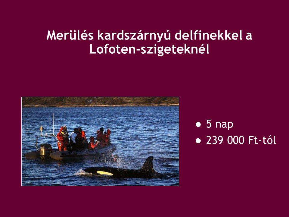 Merülés kardszárnyú delfinekkel a Lofoten-szigeteknél 5 nap 239 000 Ft-tól